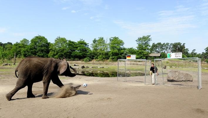 Elefantendame Nelly (Foto: obs/Serengeti Park Hodenhagen/Alexander Koerner)