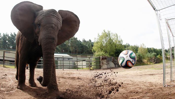 Elefanten-Orakel Nelly (Foto: obs/Serengeti Park Hodenhagen)