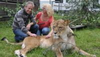 Löwen und Tiger Show