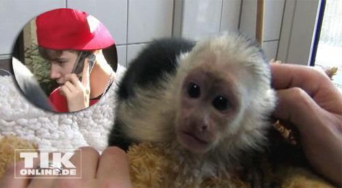 Kapuzineraffe Mally Biebers Ex Haustier Hat Ein Neues Zuhause