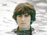 George Harrison: Gedenkbaum von Borkenkäfern zerstört