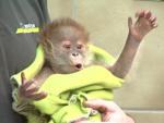 Total niedlich: Affenbaby Rieke stiehlt allen die Show!