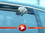 Ashton Kutcher pafft im Auto