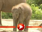 Elefantenbaby Ko Raya im Berliner Zoo