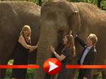 Kim Fisher und Luci van Org: Photocall mit einem Elefanten