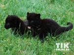 Larisa und Sipura: Die neuen Stars im Berliner Tierpark