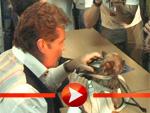 David Hasselhoff signiert einen Hund