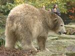 Schock im Berliner Zoo: Knut ist tot
