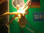 Kraken-Orakel: Aus Paul wird Ophira