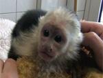 Justin Bieber: Mally kommt wohl in einen Zoo