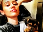 Miley Cyrus: Findelhund aufgenommen