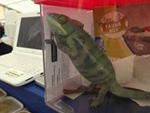 Rango ruft PETA auf den Plan: Ein Chamäleon ist kein Haustier