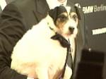 Oscar-Star Uggie: Filmhund zu krank für Hollywood