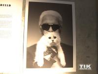 Karl Lagerfeld mit seiner Katze Choupette