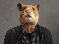 Hamster Hank