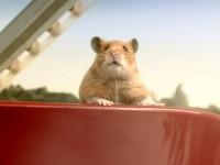 Star-Hamster Hank aus dem eBay-Film